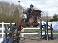 14.2hh Bay Welsh Section D Mare 9yrs