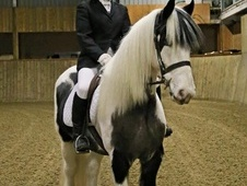 Stunning competition cob