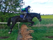 16. 2hh 5yo willing jumper, dressage paces