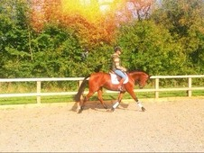 Super Talented Young Eventer