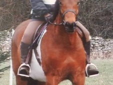 14. 2hh Coloured Allrounder