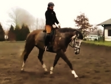 Perfect Sports Horse Allrounder