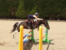 Fantastic PC/BS starter pony. Eye catching coloured gelding with ...