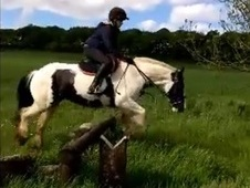Safe-Forward going Cob mare