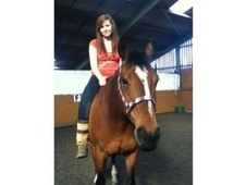 All Rounder horse - 11 yrs 2 mths 16.2 hh Bright Bay - Cumbria