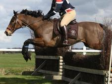 Sold! Stunning 16. 2 Eventer/allrounder