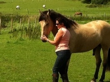 All Rounder horse - 10 yrs 5 mths 15.2 hh Dun - West Sussex