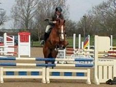 Sports horse - 5 yrs 0. 0 hh Chestnut - West Midlands