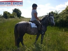 Summer, 14. 3h, Appaloosa Cross, 4 years, Mare - Lincolnshire