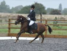 Registered Welsh Section C gelding looking for a new home and joc...