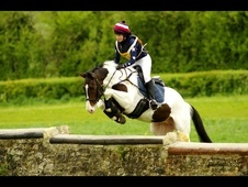 All Rounder horse - 5 yrs 16.1 hh Coloured - Wiltshire