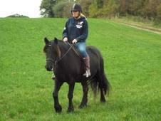 Sold pending collection fantastic fell / 1st childs pony readvert...