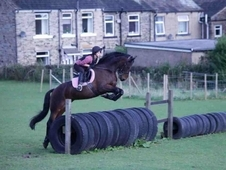 stunning 16hh all rounder mare for sale