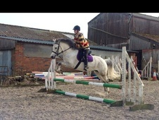 Family horse - 8 yrs 13.2 hh Grey - East Sussex