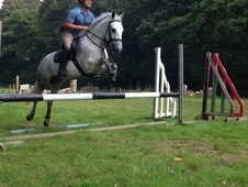 13. 2hh Irish Sports Pony