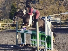 eventer/ all rounder / mother daughter share