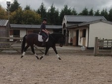 15. 2hh Bay Mare - Great Allrounder