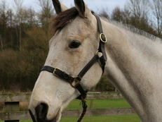 Easy Uncomplicated 15.3hh Mare