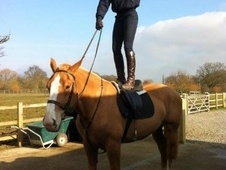 All Rounder horse - 5 yrs 2 mths 17.0 hh Chestnut - Berkshire