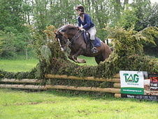 Fantastic Jumping / Hunting Pony