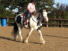 Ride & Drive Clydesdale x Cob