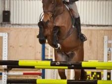 All Rounder Horse - 5 Yrs 16. 2 Hh - Kent