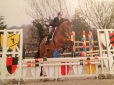 ** STAR** - Extremely Handsome 16. 3 6yr Gelding