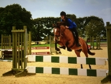 Stunning 13: 2hh PC Pony / Competition Pony