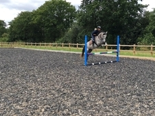 Future Event/ Show Jumping Pony