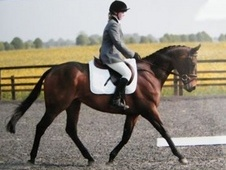 15. 3hh Calm Tb, Price Incl All Tack & Rugs