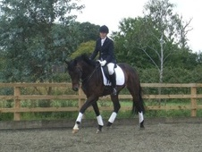 Dressage horse - 7 yrs 17.2 hh Bay - Bedfordshire