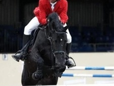 Show Jumpers horse - 6 yrs 16.1 hh Black - Essex