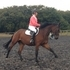 Massive potential, stunningly beautiful, backed and ready for more work, 3 y.o. 16.1hh German Warmblood gelding