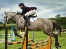 All Rounder horse - 8 yrs 16.0 hh Grey - Lancashire