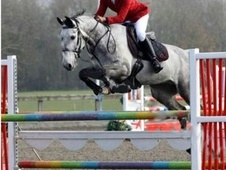 Show Jumpers horse - 7 yrs 16.2 hh Iron Grey - Essex