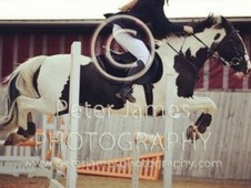 Jumping Pony For Loan Only