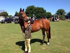 14. 3/15hh Bay Mare Ideal 2nd Pony In Essex