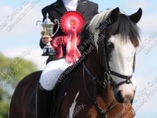 13. 2hh Showjumping pony
