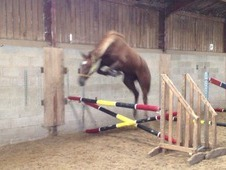 Extremely Talented 4 years mare