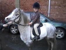 All Rounder horse - 4 yrs 2 mths 11.2 hh Dapple Grey - Ayrshire