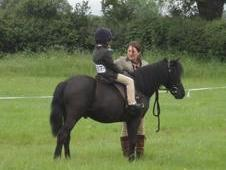 11. 2 Gelding, 14 Years, Showing, Lead Rein, Hacking Or Companion...