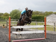 All Rounder horse - 9 yrs 10 mths 16.0 hh Bay - Kent