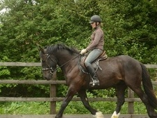 All Rounder horse - 4 yrs 15.0 hh Dark Brown - Hampshire