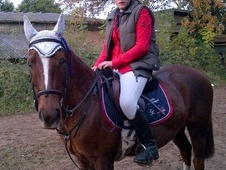 Show Jumpers horse - 13 yrs 13.2 hh Chestnut - Worcestershire