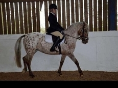 Stunning Appaloosa mare not to be missed