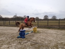 Pony Club Ponies horse - 11 yrs 12.2 hh Chestnut - West Sussex