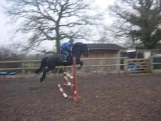 All Rounder horse - 8 yrs 14.2 hh Black - West Midlands