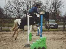 148cm fab all round pony