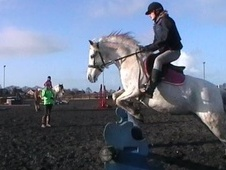 All Rounder horse - 14 yrs 11 mths 13.2 hh Fleabitten Grey - Ches...