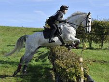 FOR SALE - Whispering Secret 15. 2hh Flea-bitten Grey Mare 12 Years